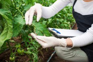 Должностная инструкция агроному по защите растений