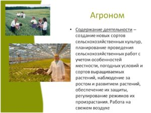 Должностная инструкция агроному-садоводу