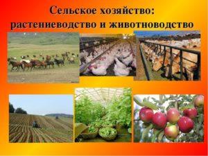 Сельское хозяйство: образцы по теме