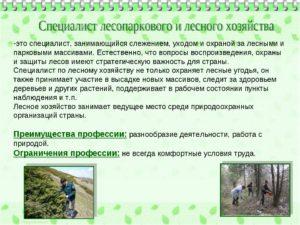 Должностная инструкция инженеру лесного хозяйства