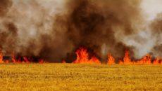 Пожары в природных экосистемах Министерства сельского хозяйства и продовольствия Республики Беларусь