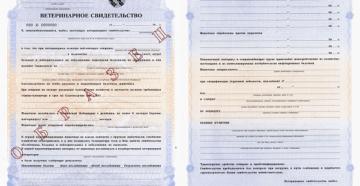 Ветеринарный сертификат. Форма № 1