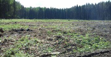 Инструкция по охране труда при очистке лесосек от порубочных остатков